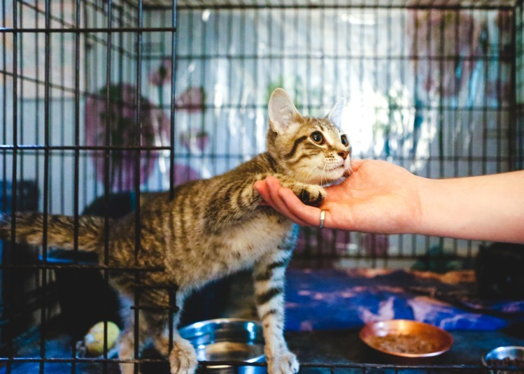 The much-anticipated Elk Grove Animal Shelter opens its doors