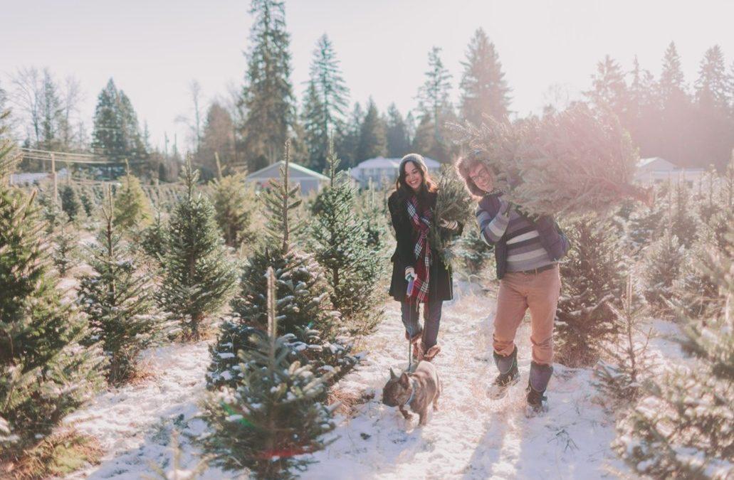 The best Elk Grove Christmas tree lots