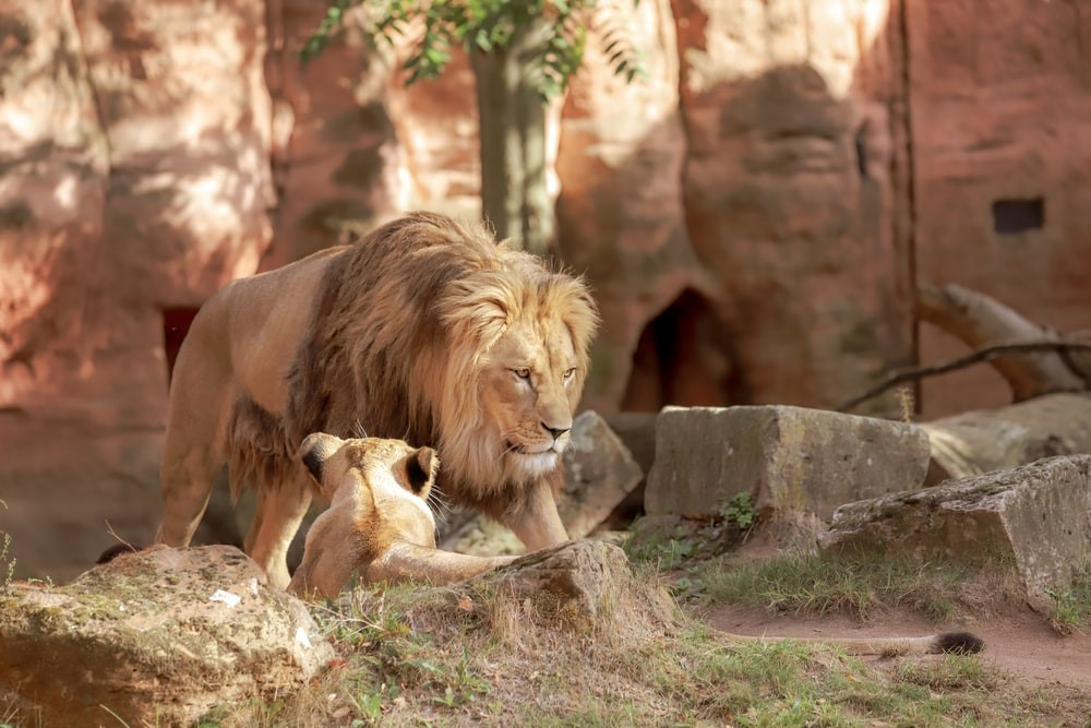 Will Elk Grove be home to new zoo?